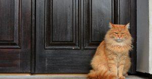 gatto condominio
